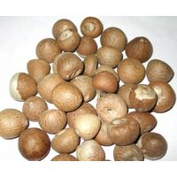Betel nut/Natural Raw Dried Betel Nuts thumbnail image