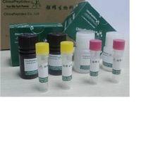 Myelin Oligodendrocyte Glycoprotein Peptide (35-55), Mouse, Rat