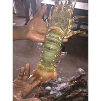 Fresh Lobsters thumbnail image