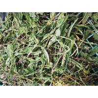 taraxaci folia/dandelion leaves thumbnail image