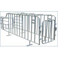 Gestation stall for pig