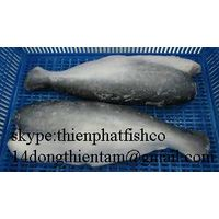 we offer pangasius hgt with good price and high quality to colombia thumbnail image