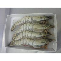 Supplier black tiger shrimp and vannamei shrim