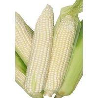 White Corn (Non GMO)