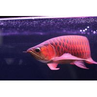 Aquarium Tropical fish Wholesale