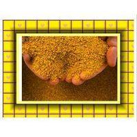Feed Grade Corn Gluten Meal thumbnail image
