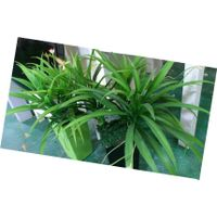 artificial in small bunch,artificial flower,arts and crafts,gifts and crafts thumbnail image