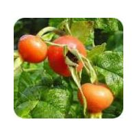 Rose Hip Extract, Manufacturer Direct Supply