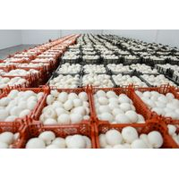 mushrooms wholesale