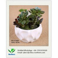 16cm Artificial Succulent in Ceramic Pot
