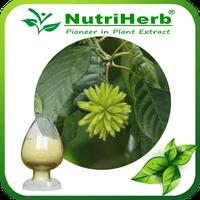 Camptotheca Acuminata Extract 98% Camptothecin/Hydroxycamptothecin