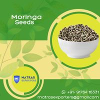Moringa seeds from India