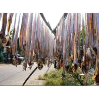 Best-Quality Dried Bombay Duck Fish