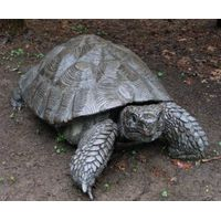 High simulation animatronic rubber turtle for sale