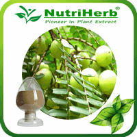 Phyllanthus emblica Extract/Phyllanthus Emblica Fruit Extract Powder/Amla Extract10:1 thumbnail image