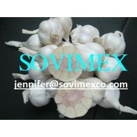 Vietnam White Garlic