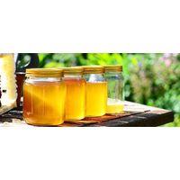 Bee Honey Purification thumbnail image
