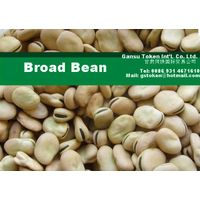 Chinese Broad Bean/ fava Bean (new Crop) thumbnail image
