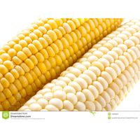 YELLOW CORN & WHITE CORN