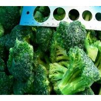 IQF Frozen  Broccoli thumbnail image