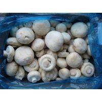 Frozen Champignon Mushroom