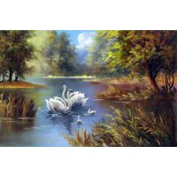 swan giclee prints