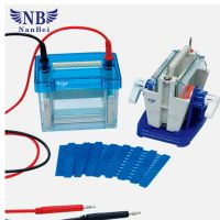 Gel electrophoresis using for Analysising proteins