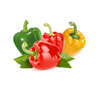 High quality fresh green and red pepper accept custom planting