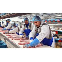 Quality Whole Frozen Pork Meat and Frozen Pork Meat and Parts / Frozen Pork Feet