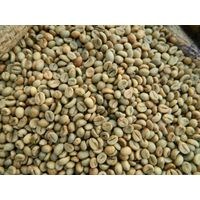Robusta Coffee Beans / POLISHED ROBUSTA GREEN COFFEE BEANS