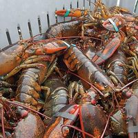 FROZEN LOBSTERS thumbnail image
