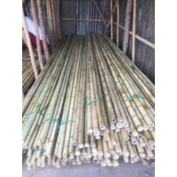 Dried bamboo stick poles