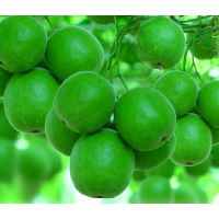 LUOHANGUO EXTRACT, Monk fruit extract,Momordica Mogrosides V