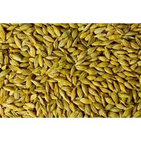 Barley (Ukraine)