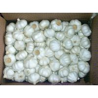Fresh Pure White Garlic For Sale