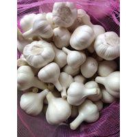 Pure white garlic, normal white garlic thumbnail image