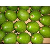 Fresh Avocados thumbnail image