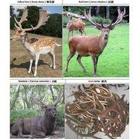 Deer Antlers Wanted thumbnail image