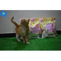 tofu cat litter with flushable thumbnail image