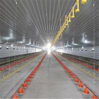 Large poultry farm steel structure frame chicken pen/Broiler coop thumbnail image