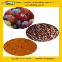 GMP Manufacturer Supply Natural 95%,98% OPC in Grape Seed Extract