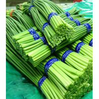 the supplier of fresh vegetable young garlic shoot from china thumbnail image