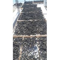 Sea Cucumbers Frozen or Dried
