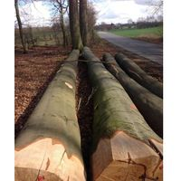 EUROPEAN BEECH LOGS, ABC GRADE