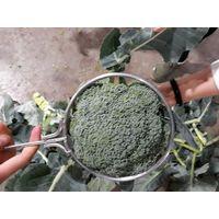 Fresh Broccoli Change Category