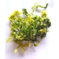 New Crop Air Dried Green Cabbage