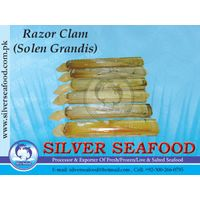 Razor Clam(Solen Grandis)