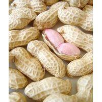 peanut in shell thumbnail image
