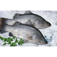 High quality Barramundi
