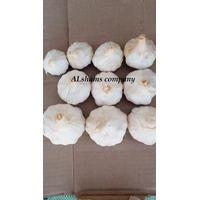 fresh garlic with high quality thumbnail image